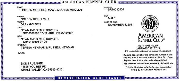 MAXIMUS (Max) AKC Registration   Brubaker's Norcal Golden Retriever