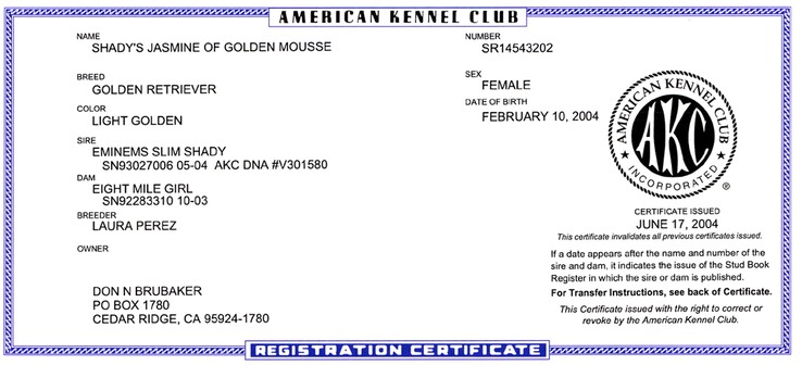 JASMINE AKC Registration | Brubaker's Norcal Golden Retriever Puppies