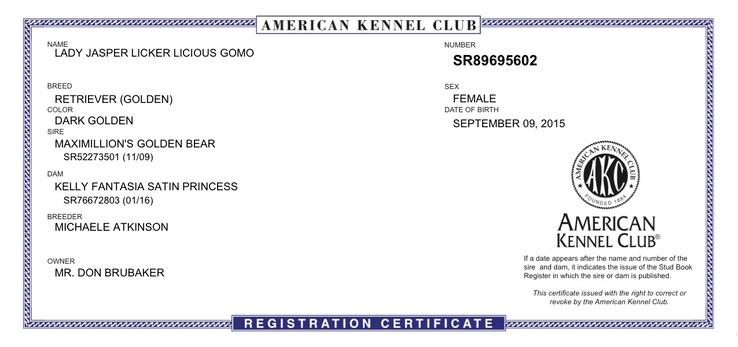 JASPER AKC Registration   Brubaker's Norcal Golden Retriever Puppies