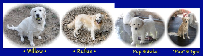 Willow Rufus Home Page